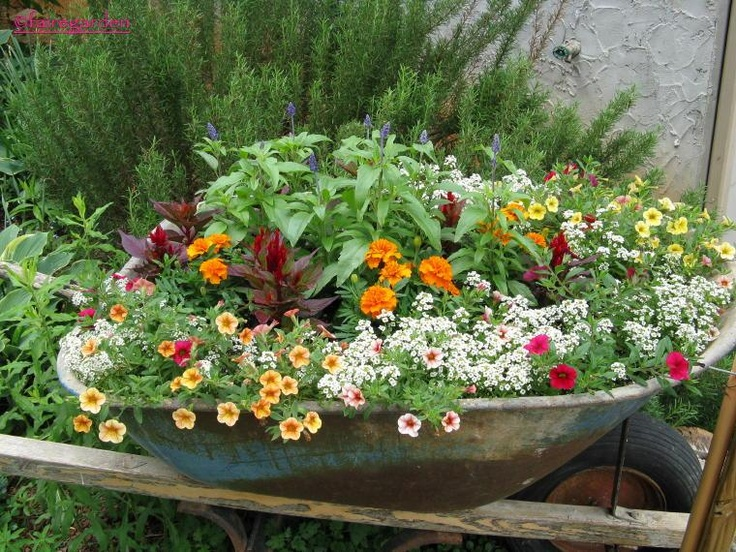 Flower Garden Ideas With Old Wheelbarrow best 25+ wheel barrow ideas ideas on pinterest | wheelbarrow
