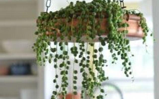 Oltre 25 fantastiche idee su piante da interno su pinterest piante da appartamento - Piante da tenere in casa ...
