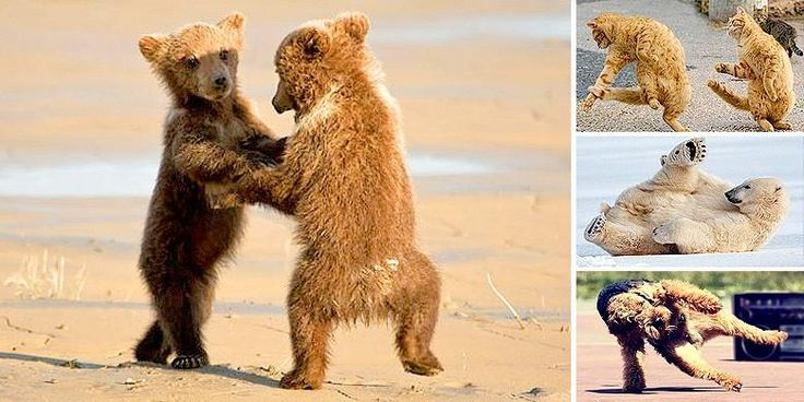 theres nothing like cute dancing animals to help you start off the