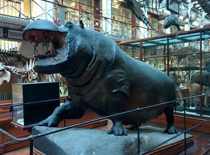 Hippo! I wouldn't like to make him angry.