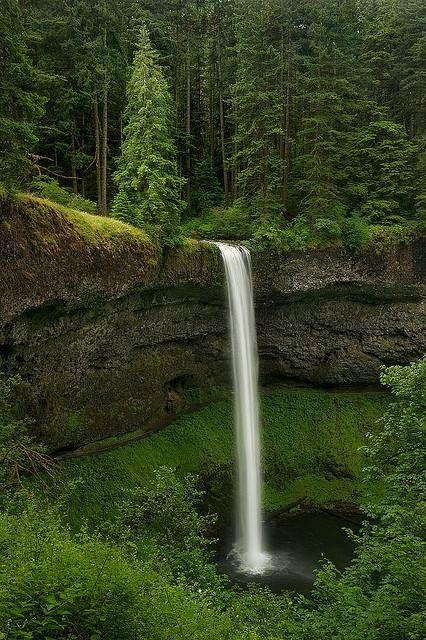 Secret Forests ~ Silverfalls State Park, Oregon, US.
