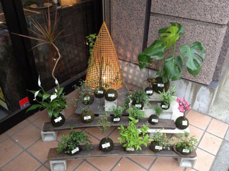Japanese Gardening Inspiration: Kokedama