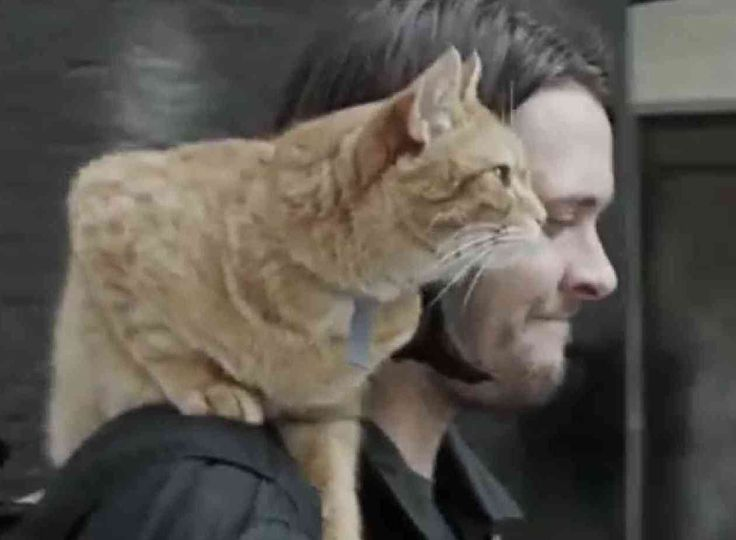 A Street Cat Named Bob: A Tale Of Rescue And Redemption  ... from PetsLady.com ... The FUN site for Animal Lovers