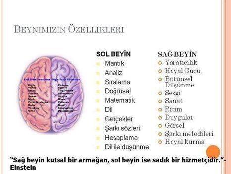 Beynimizin özellikleri...