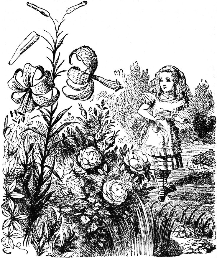 """Alice meets the flowers in Lewis Carroll's """"Through the Looking Glass."""" Illustration by artist John Tenniel."""