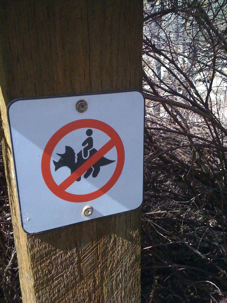 Dinosaur riding prohibited.
