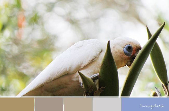 livingcloth.com | Creating Love Of The Handmade natures colours on a little corella in my garden http://livingcloth.com
