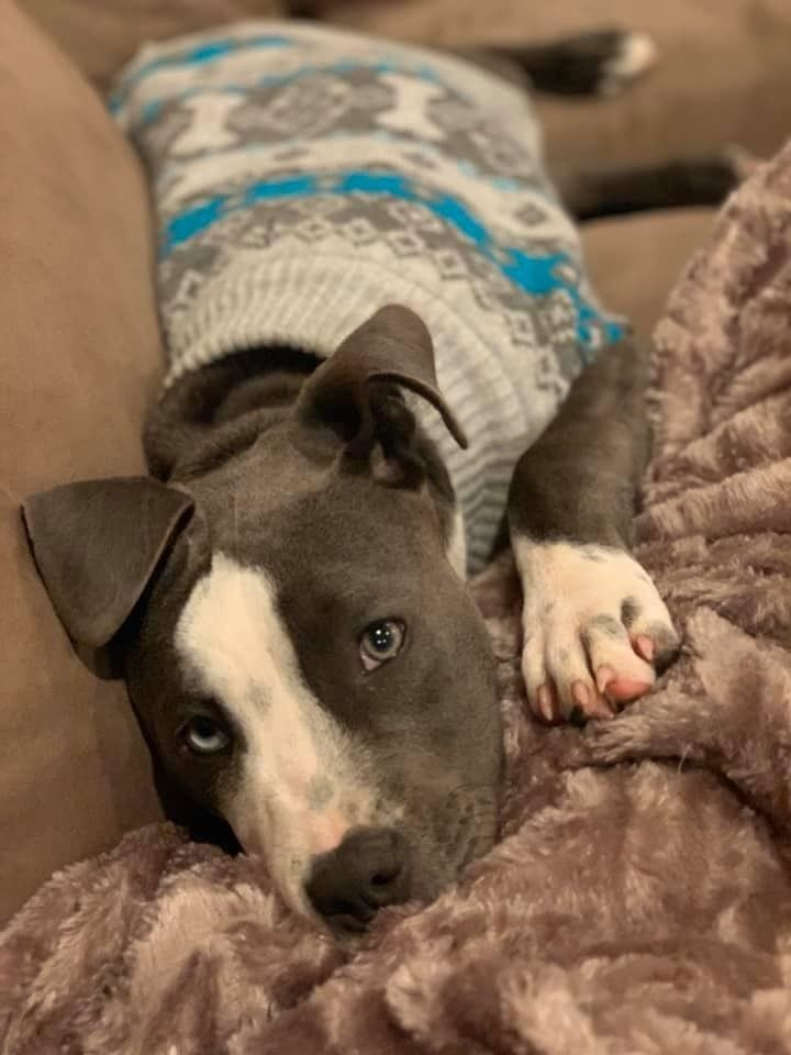 Adopt Puppy Willow On Petfinder In 2020 Pets Dogs Breeds Puppies Foster Dog