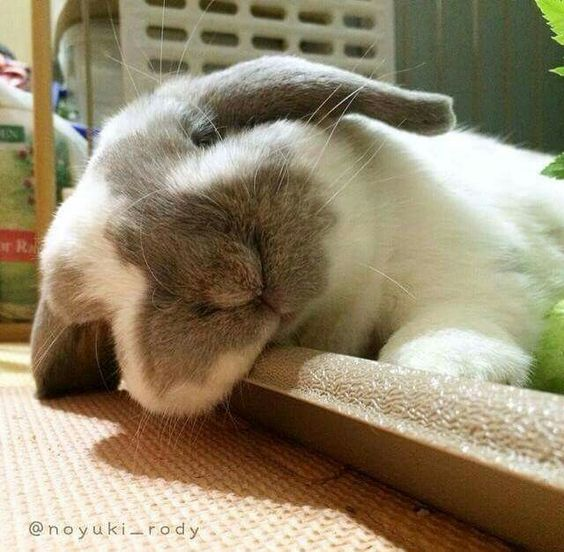 Over and out every bun! We's need our rest for a Saturday full of misbehaving :P