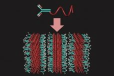 3-D antibody arrays offer better sensing