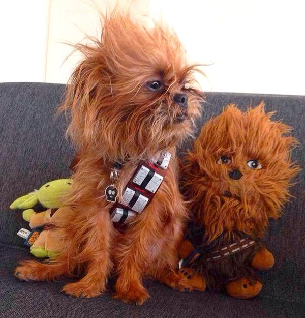 69 best Dog halloween costumes images on Pinterest | Pet costumes ...