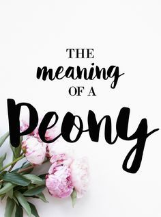 What is the meaning of a Peony? The peony pretty much universally means love (romance, happy marriage, affection) and good luck (good fortune, wealth, being saved from a teacher by Zeus)