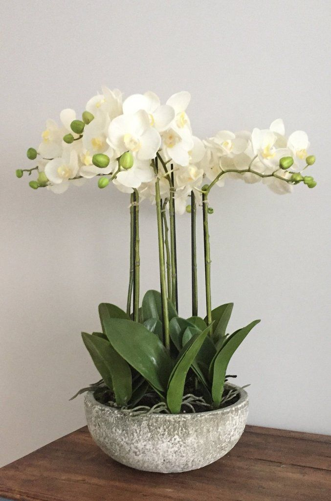 Large Luxury Artificial Potted Orchid Arrangement Orchid Arrangements Kitchen Flower Arrangements Large Floral Arrangements
