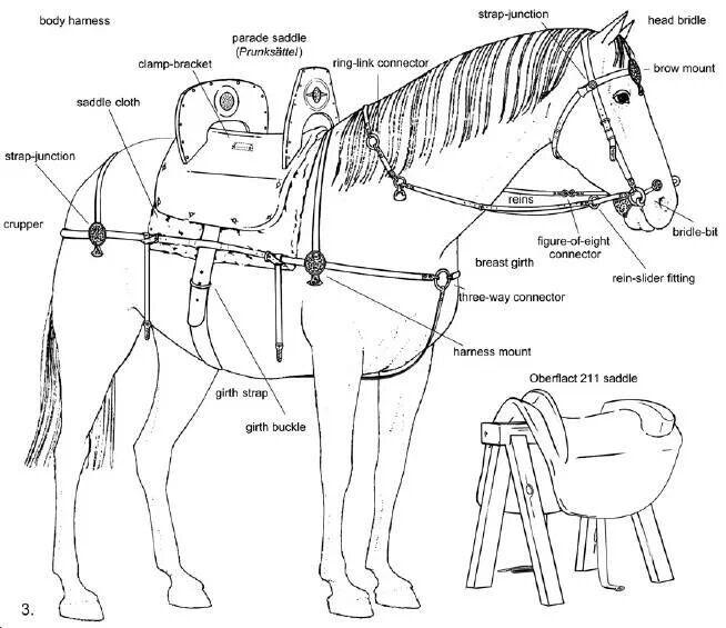 early anglian horse harness