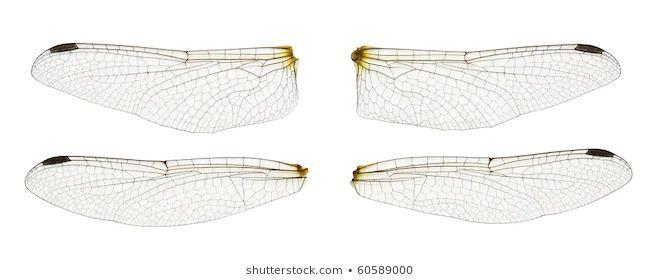 bilder stockfotos und vektorgrafiken insect wings
