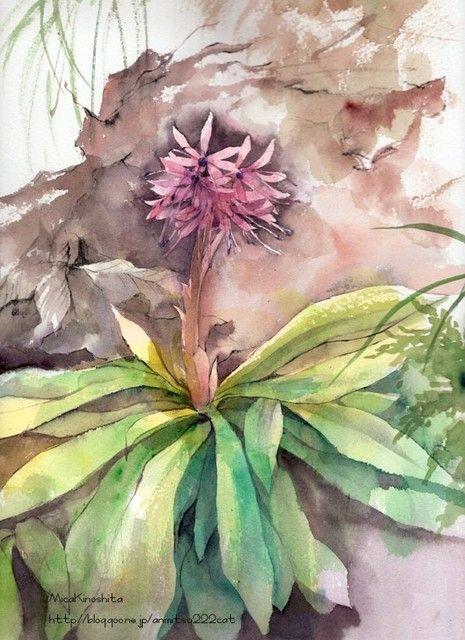 5月に行った新潟のスケッチの様子をまだアップします。 ちょうど新芽が吹き出すころで ちいさなかわいらしい野の花でいっぱいでした。 5月は山菜採りにもよい季節です。 ただ、お山の所有者がいらっしゃるのでむやみに採ってはいけません! まずは定番?! ショウジョウバカマ。 葉っぱのかたちをお猿さんの袴に見立てています。 初めて見たお花その1、アズマシロガネソウ。 高さ10cmほどの実に可憐なお花で、道路わきに群生していました。 3時をまわるとみるみるお花が閉じてしまいましたが、 立派なカメラを持った男性がこれを撮るために探していたようで すぐ横で撮りはじめました。 わたしが描いていた花がいちばんかっこよかったらしい。 でしょでしょ! 描く前にうろうろしていちばん素敵なのを選んだんだもん。 でも一瞬遅か...