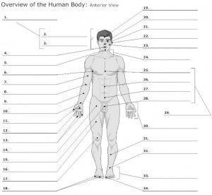 130 best images about anatomy on Pinterest | Pressure points ...