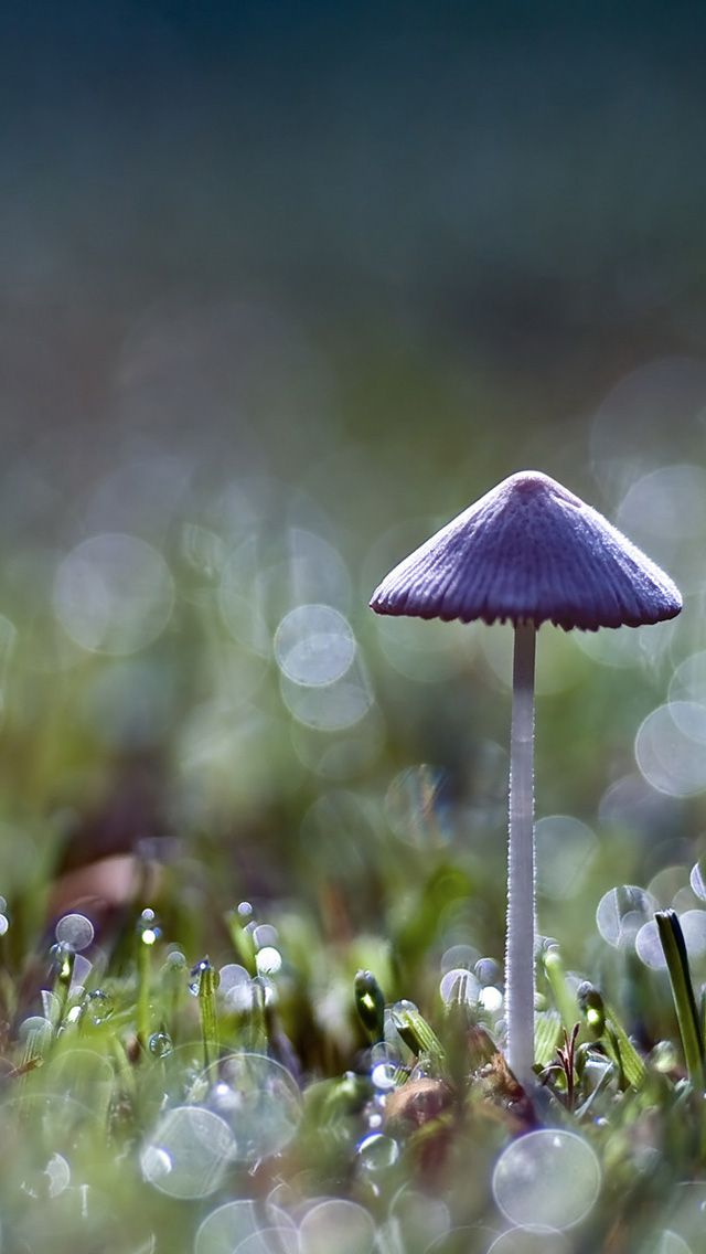mushroom wallpaper phone - photo #8