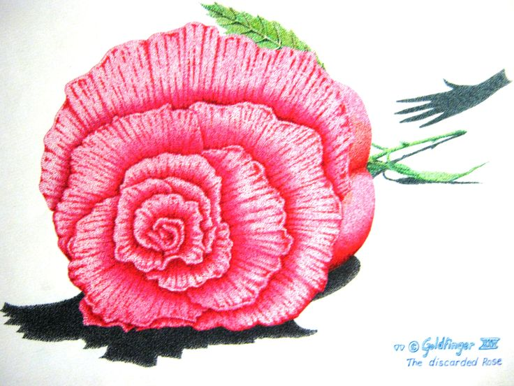 """Technical pen on watercolour paper  10 x 12"""" Aprox. """"Discarded Rose"""""""