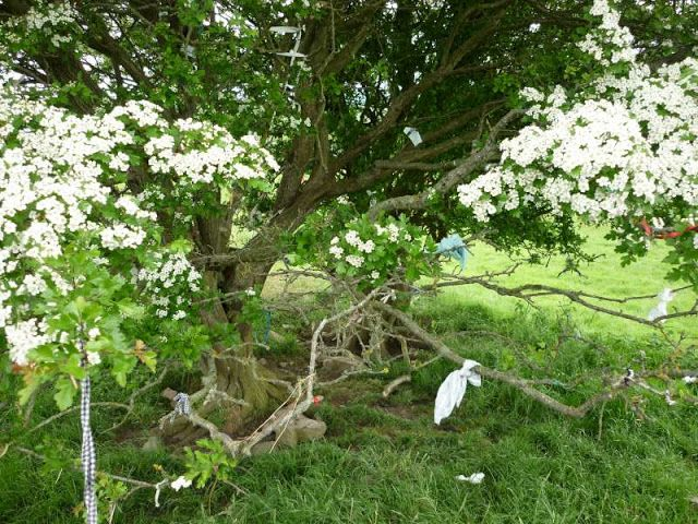 Tracey-anne's Blog: Beltane )O( 30th April ~ 1st May ~ May Day 2016