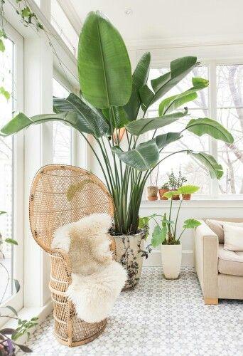 Urban jungle zithoek met rotan stoel en schapenvacht. De droom voor iedereen die droomt van een tropisch interieur!