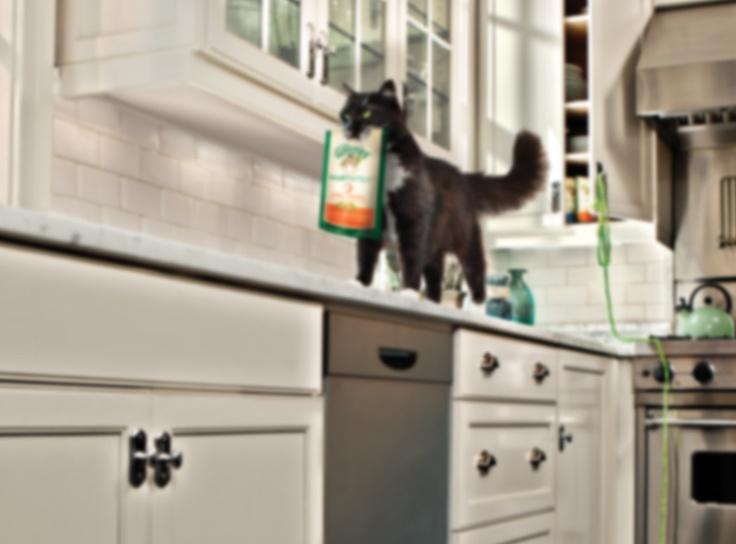 FELINE GREENIES® Cat Dental Treats & Dental Chews   Greenies.com