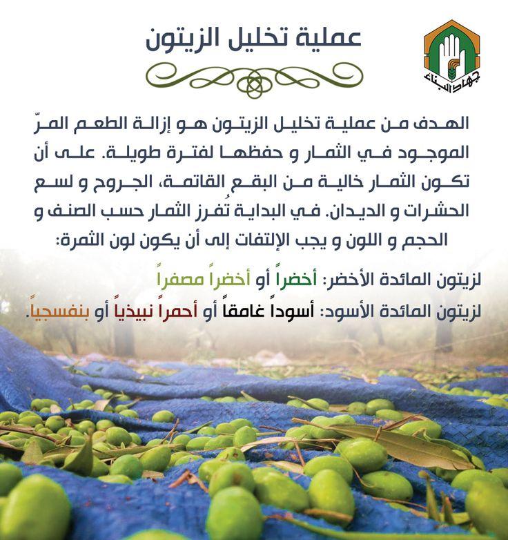 تخليل الزيتون #jihad_al_binaa