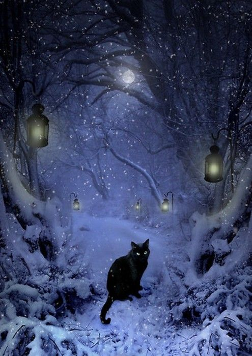black cat in winter  absolutely exquisite picture of beautiful black cat!!! long admired for their uniqueness, black cats do indeed rule!!!
