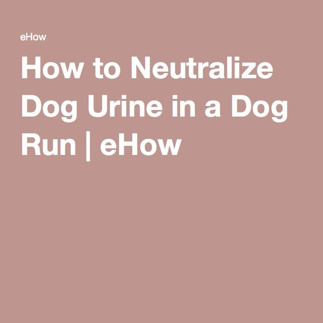 How to Neutralize Dog Urine in a Dog Run | eHow