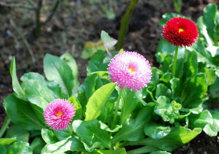 Aysegul's Flowers