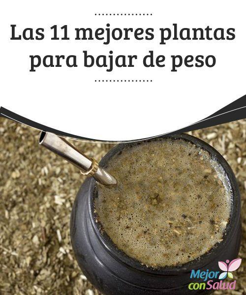 Las 11 mejores plantas para bajar de peso las virtudes for Plantas para bajar de peso