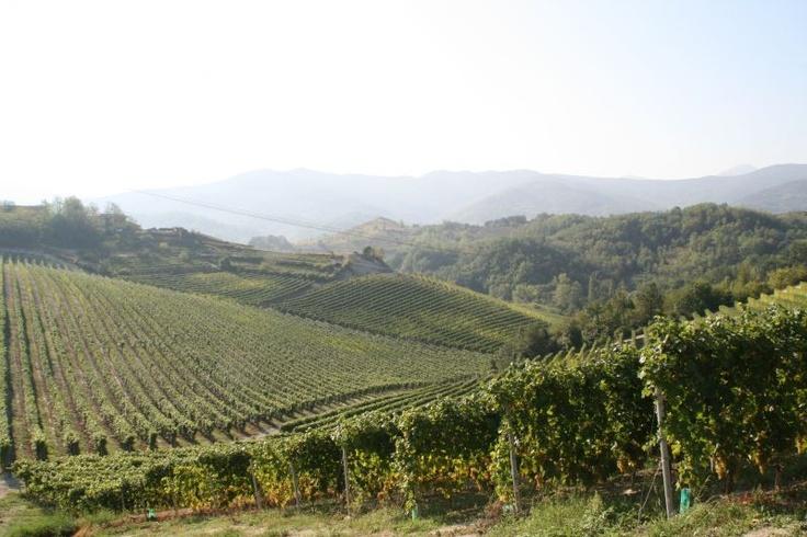 Cantina San Matteo Vineyards  (GAVI) #wine