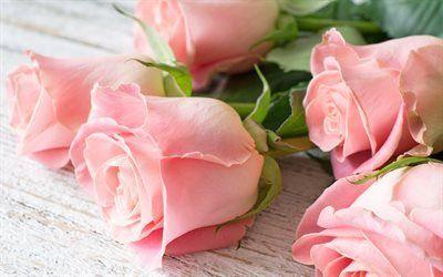 Scarica sfondi rose, un mazzo di rose, bellissimi fiori, bouquet gratuito, rose rosa