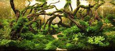 Online popular vote | Aquatic Plants Layout Contest 2012  W90xD45xH45 (cm)