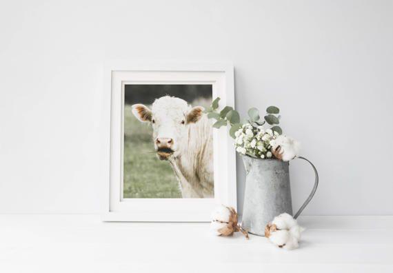 Wow Cow, FarmHouse Fine Art Print