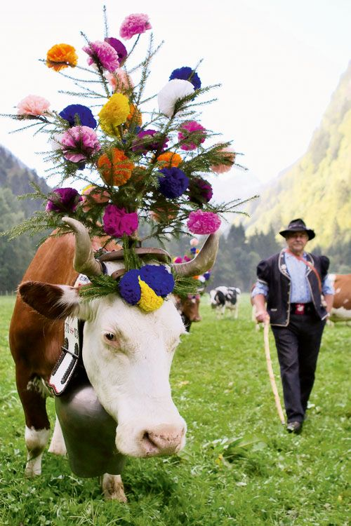 Gruyere, Switzerland. Celebrating the Swiss festival of Désalpe, when the cows return from a full summer spent up in the alps.