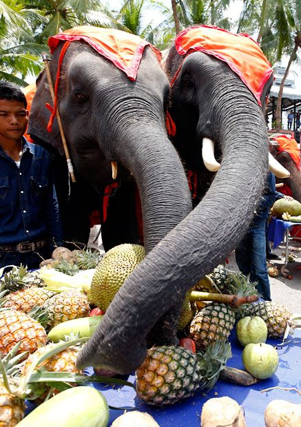 Elephants enjoy fruit from an all-you-can-eat buffet offered to them to mark National Elephant Day in Pattaya, Chonburi province, Thailand    Picture: EPA/RUNGROJ YONGRIT (via Animal pictures of the week: 15 March 2013 - Telegraph)