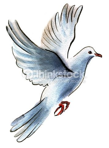 Stock Illustration : Ink and watercolor drawing of a dove on a white background