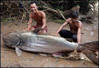Tonle Sap: The Flowing Heart of Cambodia Queue In November 2005, a fisherman on the Mekong River caught this 400 lb. giant catfish.