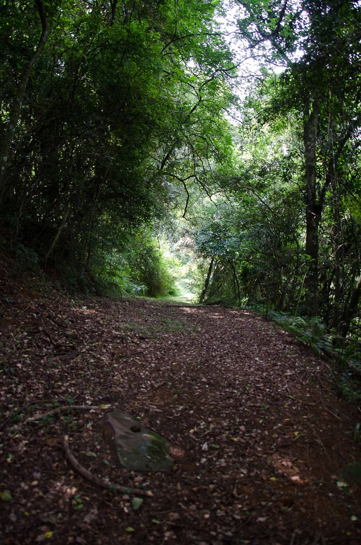 Our magical forest trail