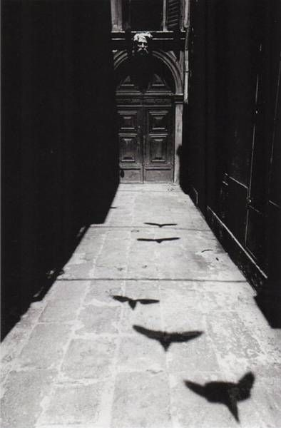 renesoto - Photo by Ikko Narahara Venezia - 1964 (from the series: