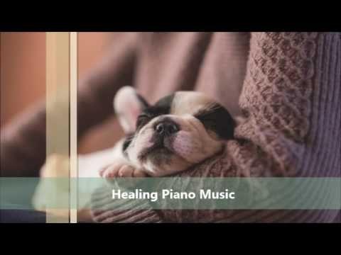 강아지, 고양이의 안정을 위한 음악   Music for the  of dogs and cats (relieve sleep dep...