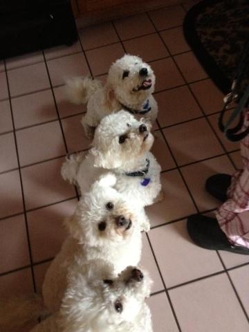 Buddy, Buster, Brady and Teddy...the fab four :)