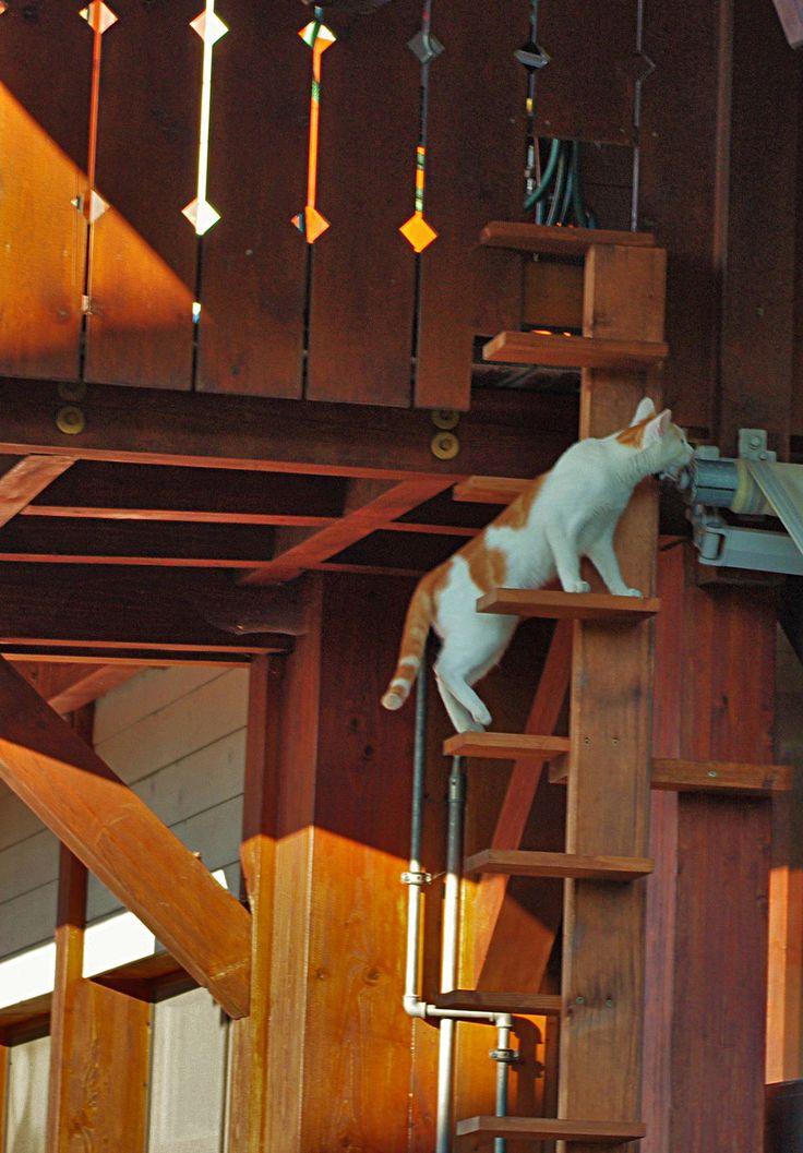 https://flic.kr/p/xqkzZn   cat_ladder