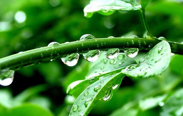 Обои картинки фото макро, листья, капли, green, растение