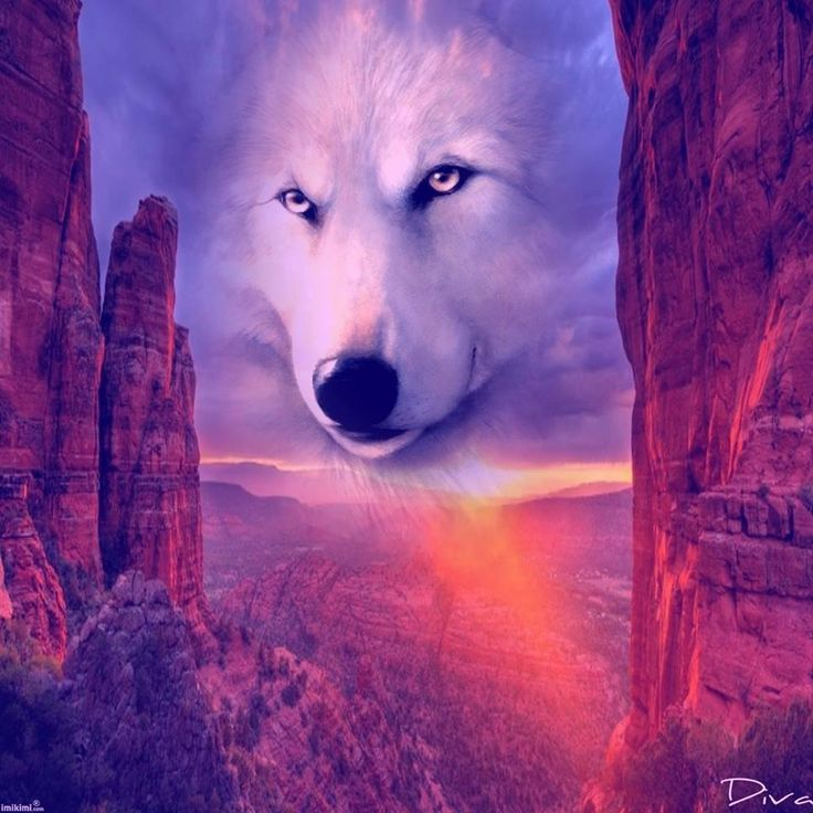 Amazing Wolf: 304 Best Images About Amazing Pics On Pinterest