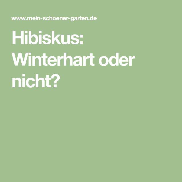Hibiskus: Winterhart oder nicht?