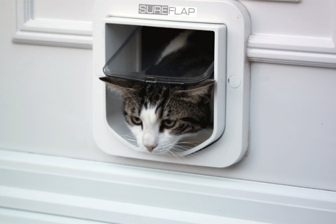 An amazing and safe way to let your Cat travel in and out (or just in)! $125.00