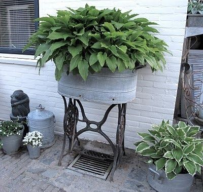 Hosta in galvanized containers...courtesy of Primitive Pond Homestead http://media-cache7.pinterest.com/upload/46161964900726271_wHGbWumD_f.jpg kathymcdonald container gardening