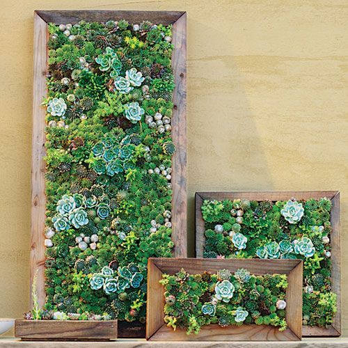 1000 ideas about succulent frame on pinterest succulent for Exterior wall mural ideas